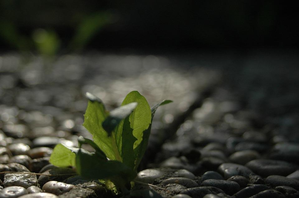 Resistance, Live New, Plant, Bokeh