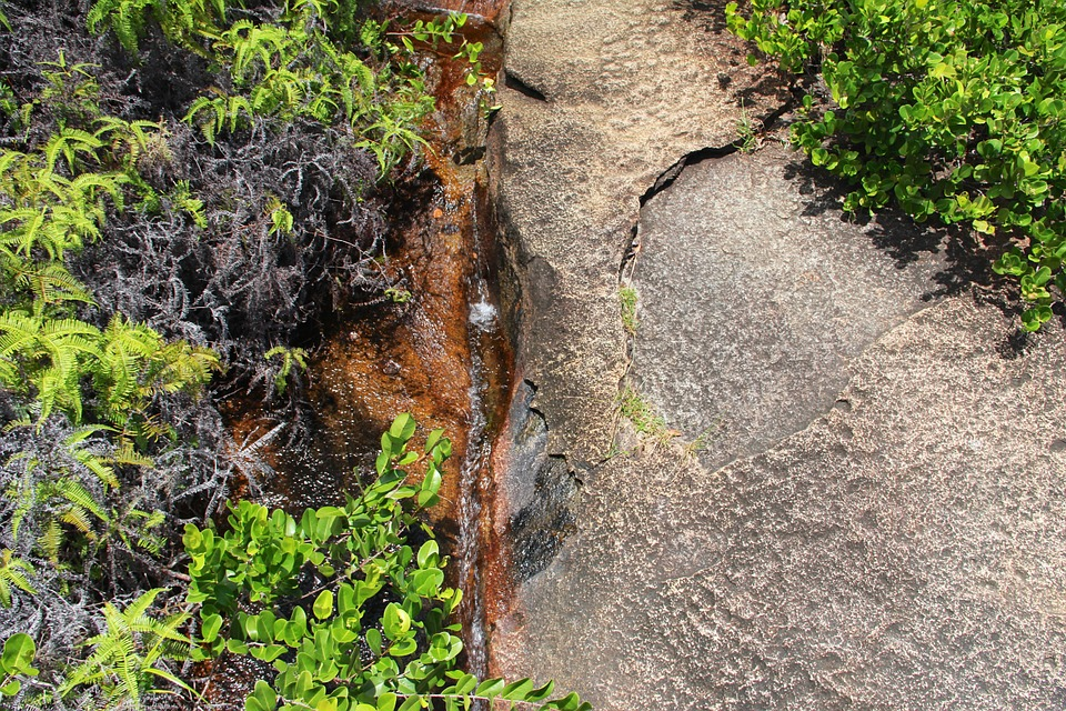 Rock, Plant, Live, Nature, Water, Small Stream