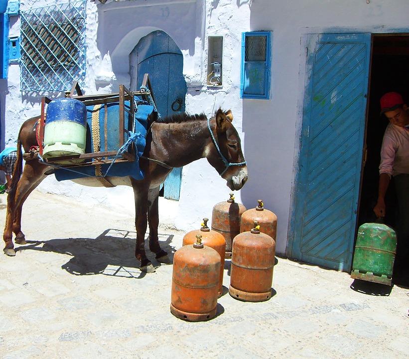 Donkey, South, Livestock, Gas Bottle, Animal, Transport