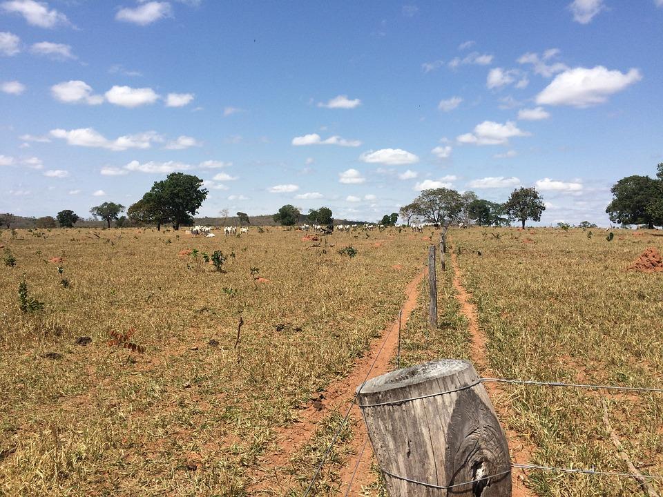 Dry, Pasture, Livestock