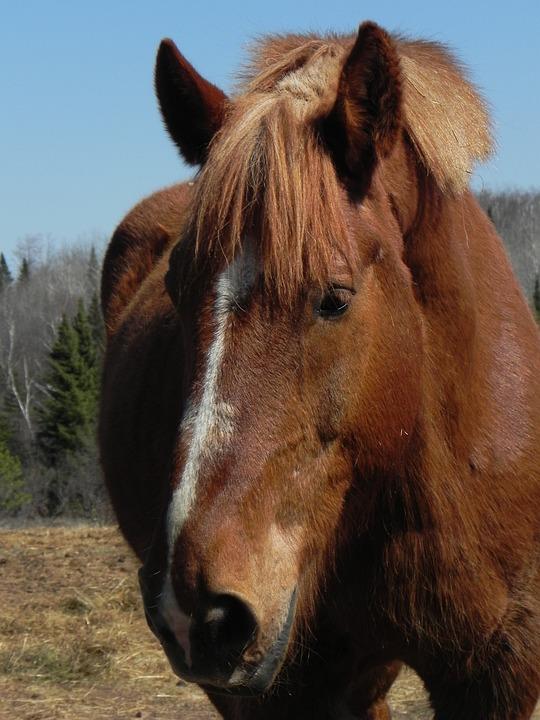 Horse, Farm, Animal, Ranch, Domestic, Rural, Livestock