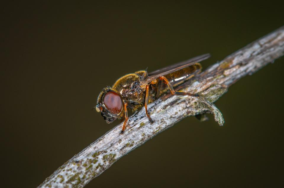 Insect, Nature, Living Nature, Fly, Animals