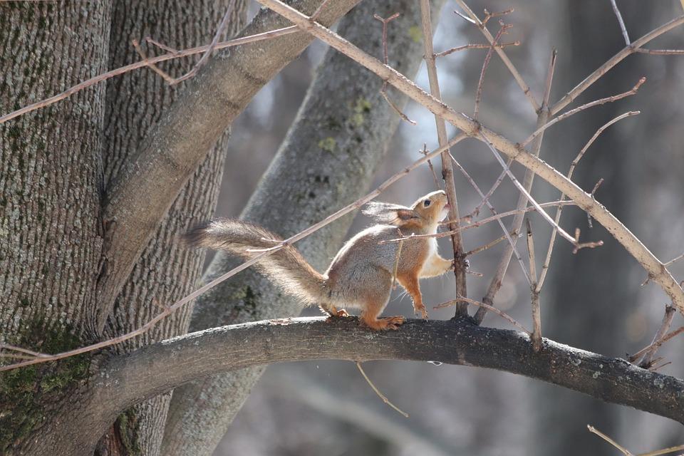 Nature, Animals, Living Nature, Tree, Outdoors
