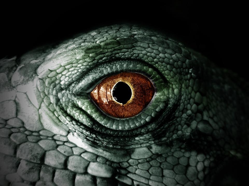 Iguana, Reptile, Lizard, Chameleon, Eye, Green, Scales