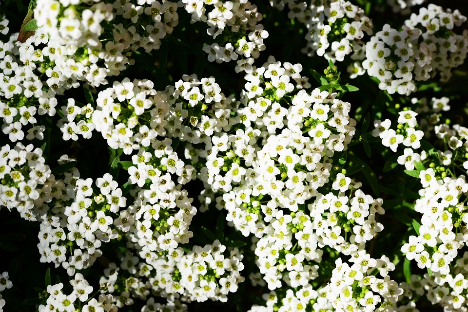 Les meilleures fleurs odorantes pour votre jardin