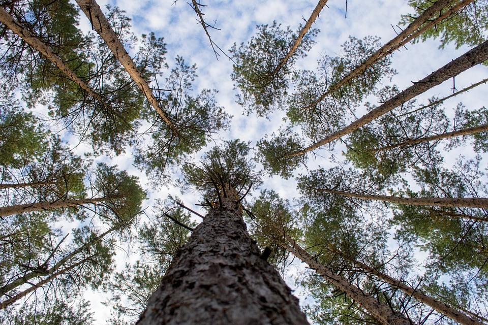 Log, Crown, Forest, Bark