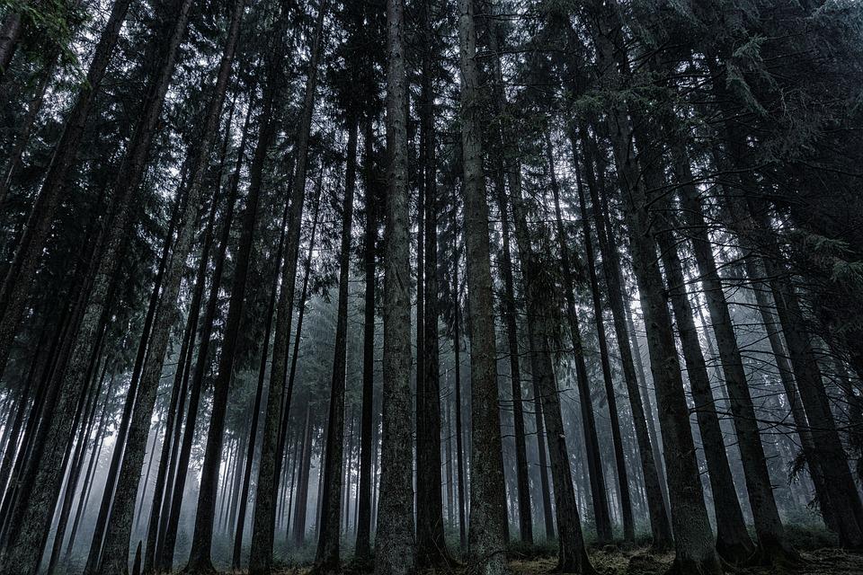 Forest, Nature, Landscape, Log, Trees, Wood, Leaves