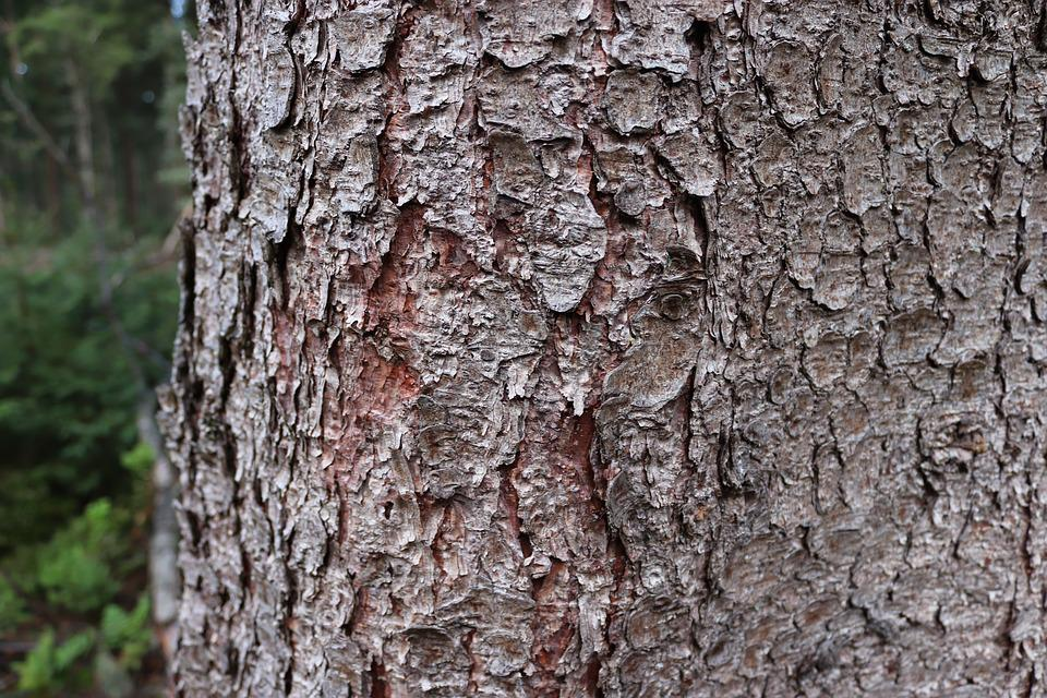 Tree, Bark, Texture, Forest, Log, Softwood