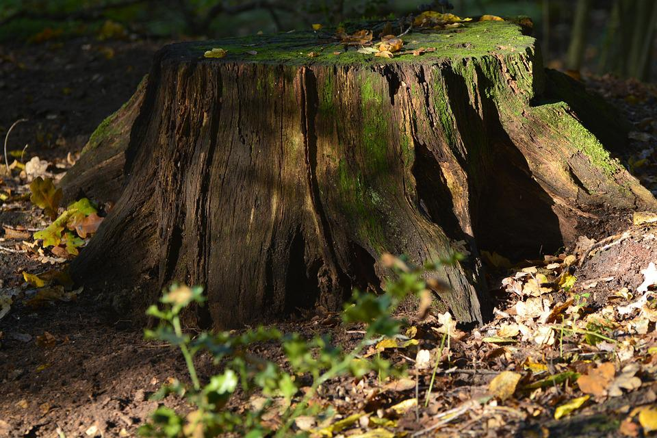 Nature, Wood, Tree, Moss, Forest, Log