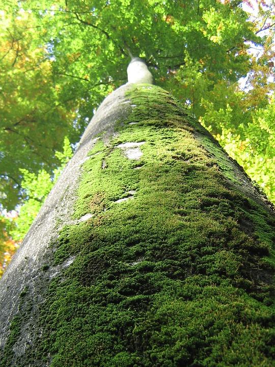 Tree, Log, Nature, Green, Bark, Tribe