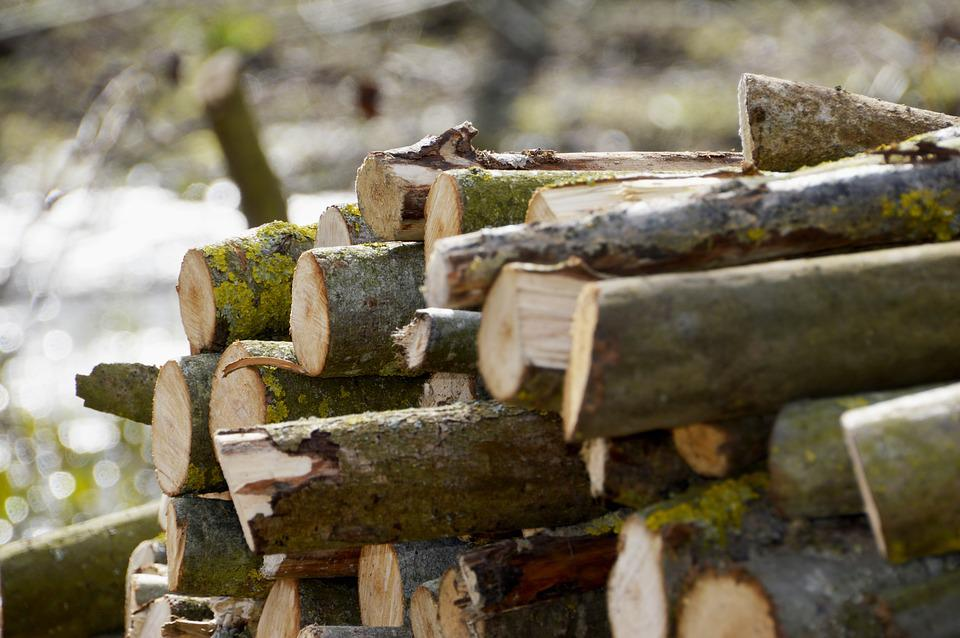 Wood, Log, Tree, Nature, Outdoor, Firewood, Environment