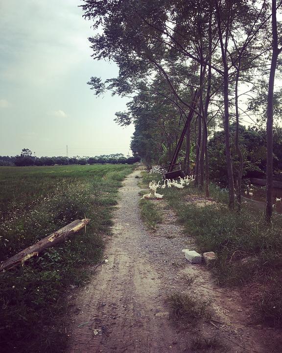 Tree, Sky, Trail, Log