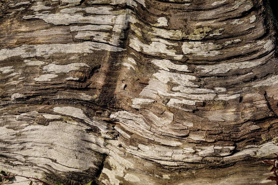 Background, Tree, Bark, Log, Driftwood, Tree Bark