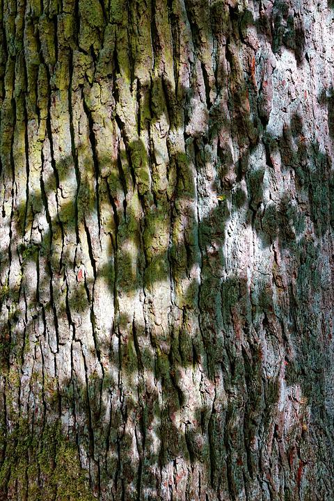 Tree, Tree Bark, Nature, Log, Structure, Tribe, Pattern