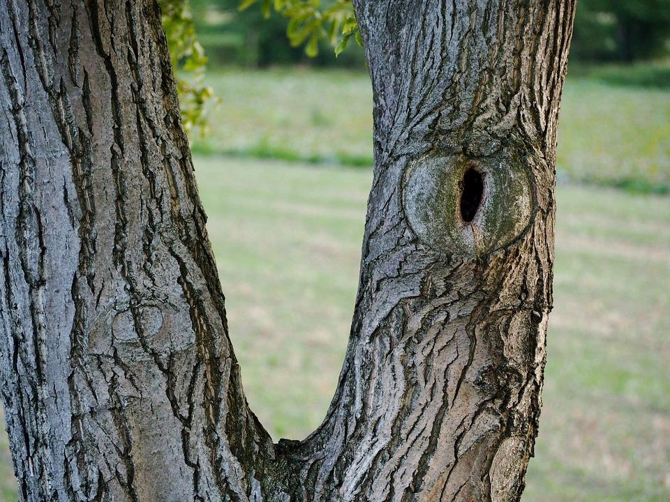 Tree, Log, Bark, Nature, Wood, Mood, Tree Trunks