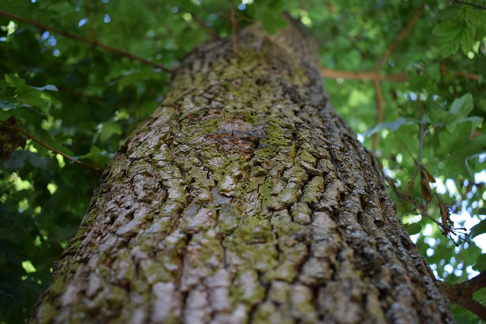 Tree, Wood, Structure, Old, Nature, Log, Forest, Tribe
