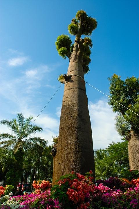 Tree, Log, Thicker Stem