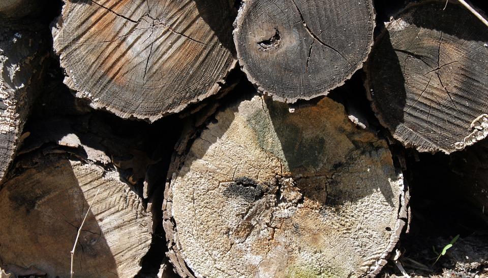 Logs, Wood, Cut, Nature, Recycling, Circle, Cracks