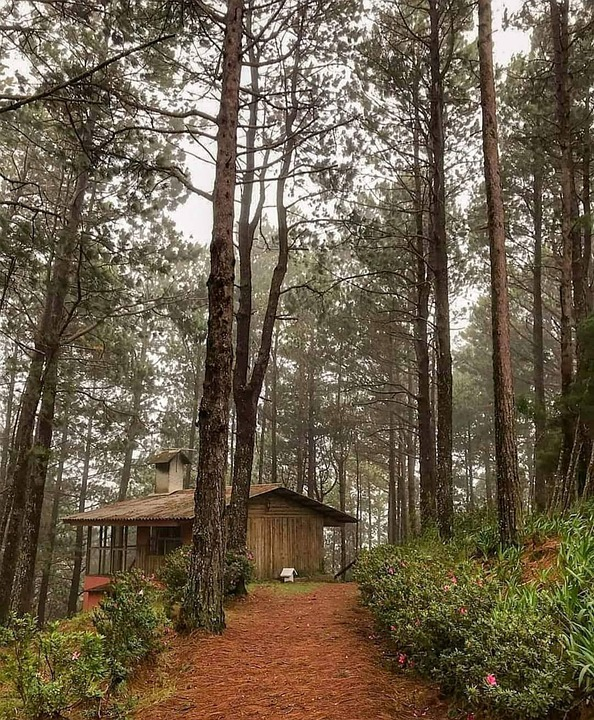 Cabin, Forest, Isolated, Only, Loneliness, Trees