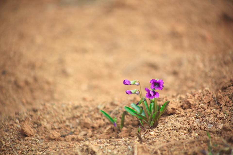 Nature, Loneliness, Plants, Little, Play Viola, Flowers