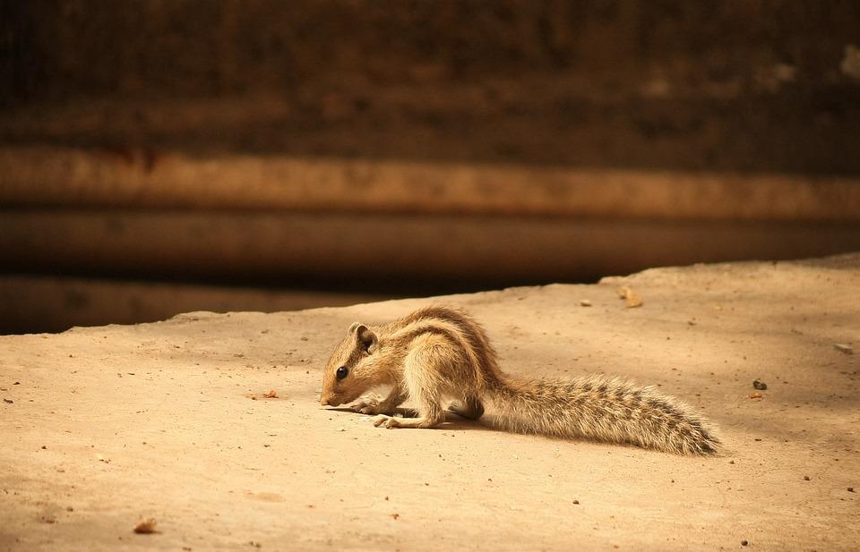 Squirrel, Animal, Wildlife, Mammal, Alone, Lonely