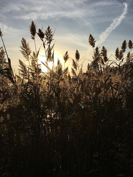 Shoreline, Shore Grasses, Long Island Sound