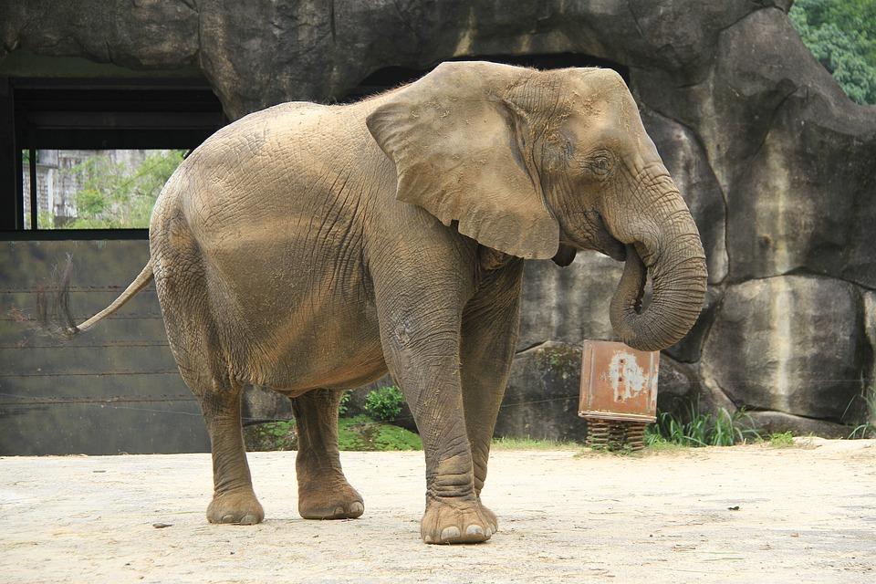 Like, Zoo, Big Ears, Long Nose, Strong, Land