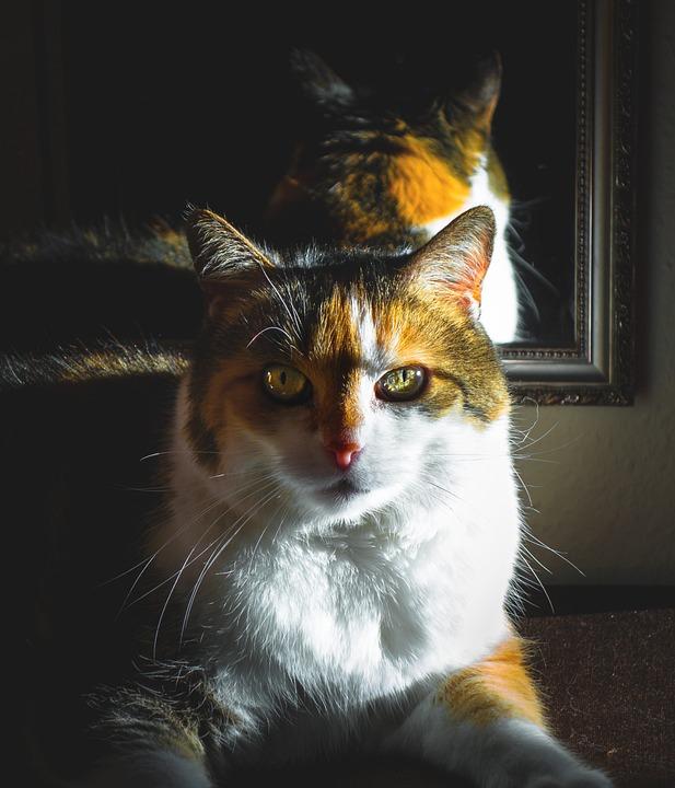 Cat, Cat's Eyes, Look Up, Curious, Contact