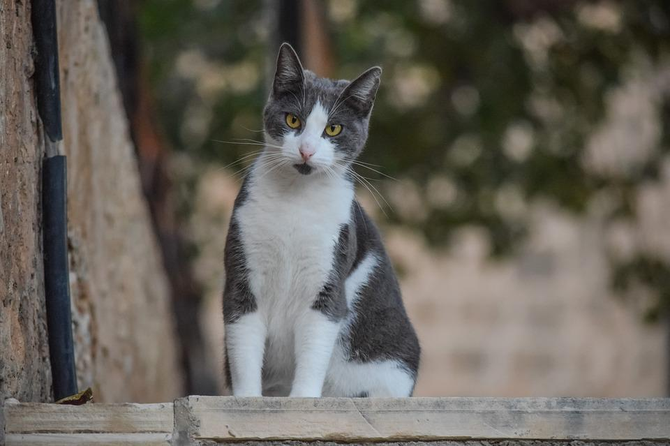 Animal, Cute, Cat, Stray, Nature, Portrait, Looking