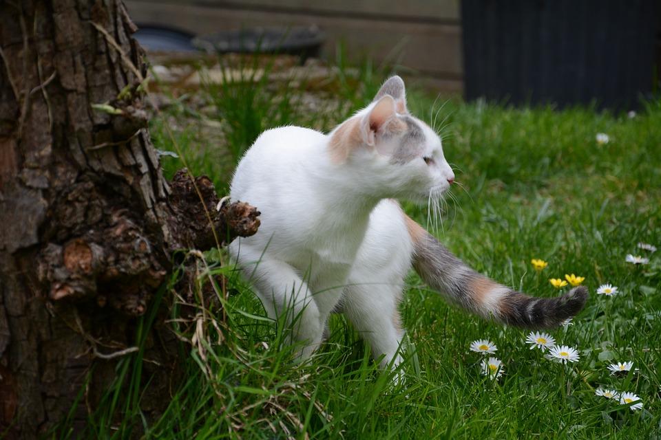 Cat, Grass, Lookout, Cute