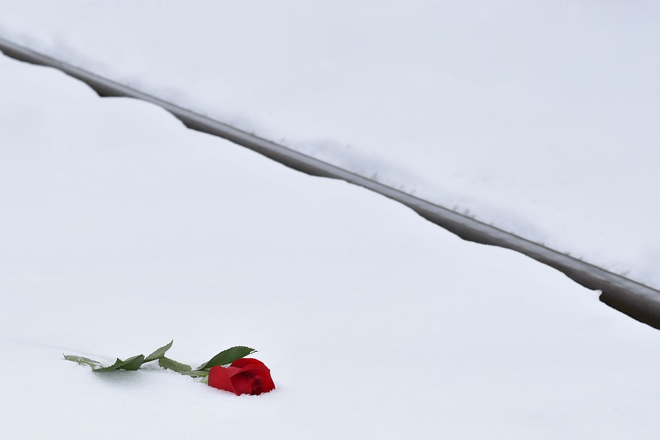 Red Rose In Snow, Love Symbol, Railway, Lost Love