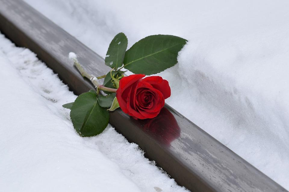 Red Rose, Lost Love, Rail Track, Snow, Winter