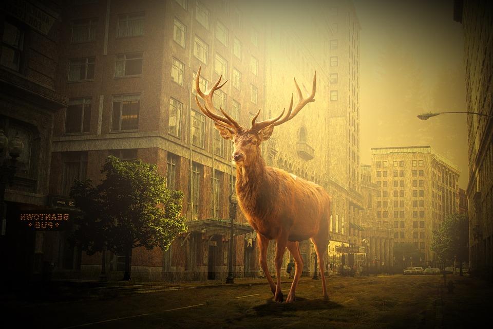 Hirsch, Wild, Jungle, Lost, Boston, City, Road