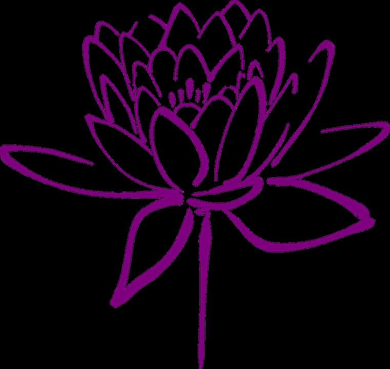 Lotus, Flower, Blossom, Petals, Decorative, Blooming