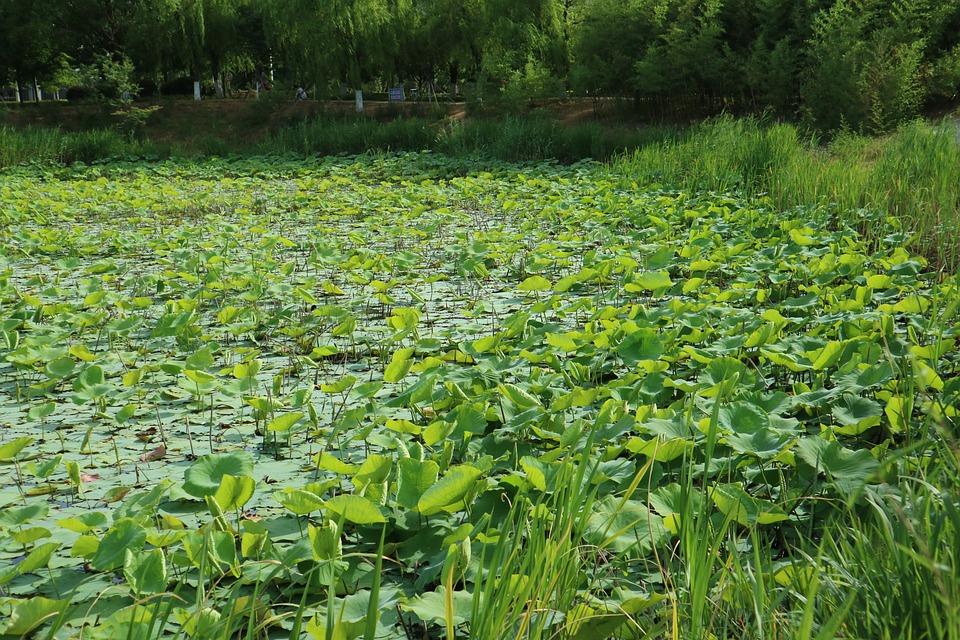 Senior Year, Lotus Pond, If The Water Park, University