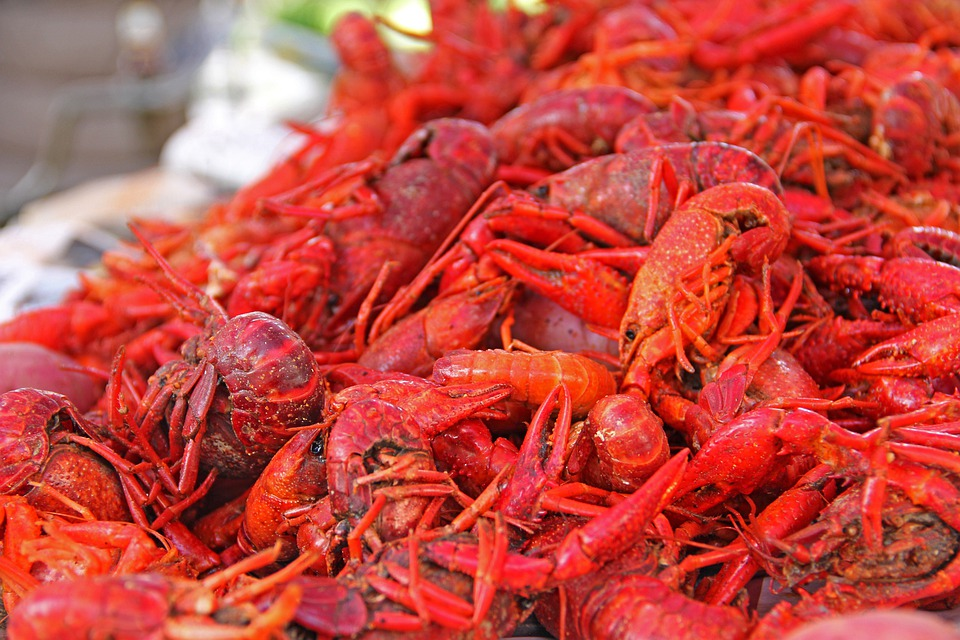 Crawfish, Mud Bugs, South, Louisiana, New Orleans, Food