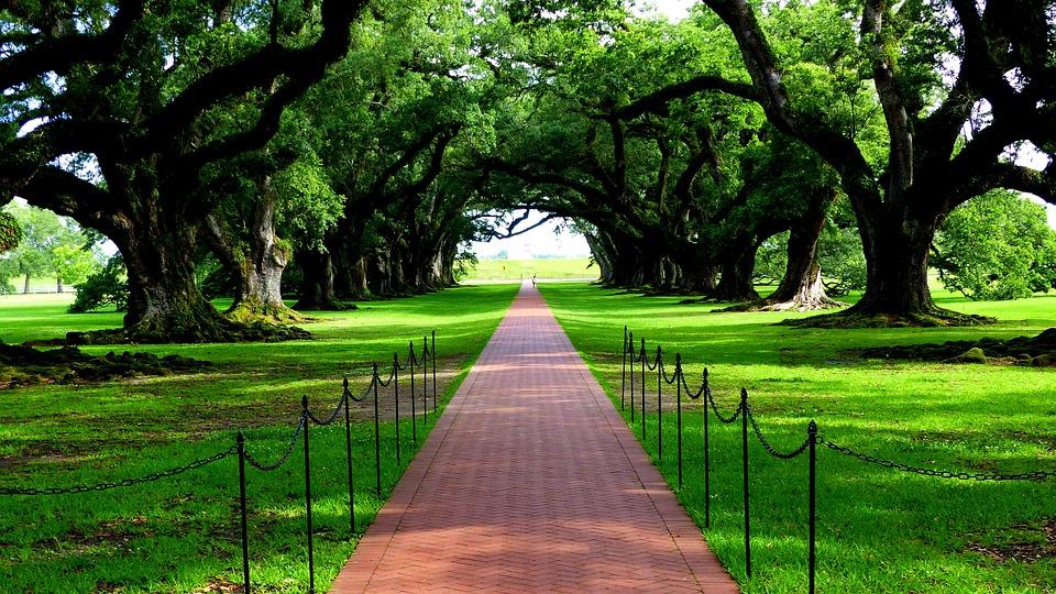 Nature, Trees, Green, Louisiana, Plantation, Oak Alley