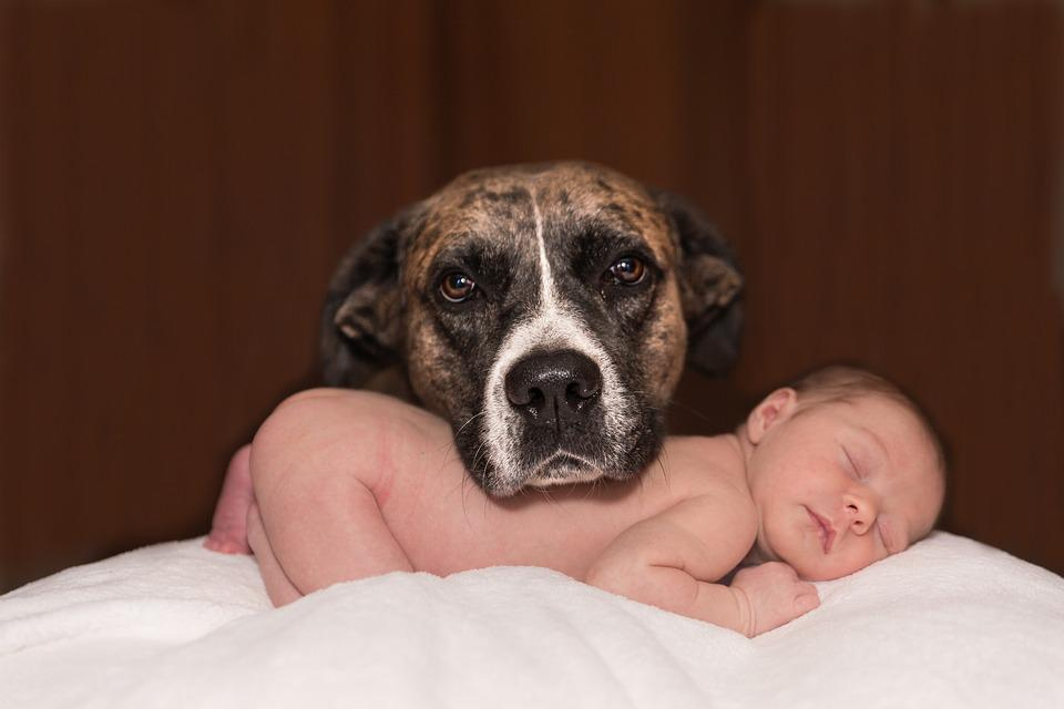 Dog, Baby, Animal, Small, Canine, Love, Infant