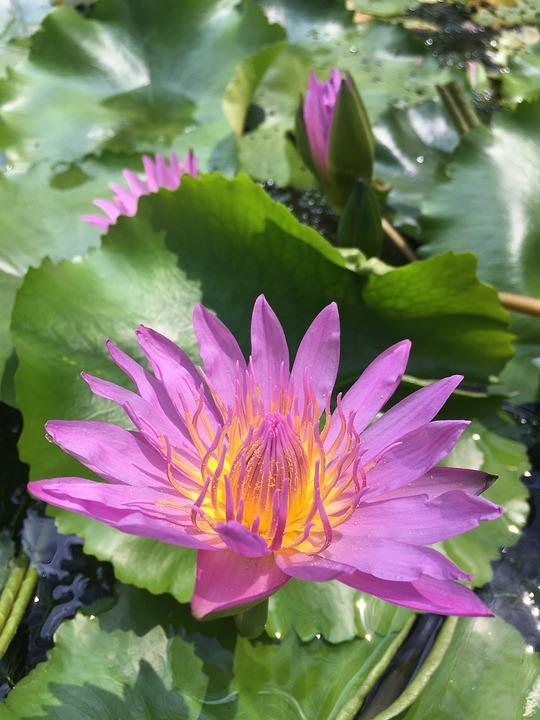 Pink, Flower, Spring, Bloom, Blossom, Love, Plant