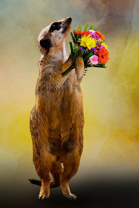 Animal, Meerkat, Bouquet, Thank You, Love, Flowers