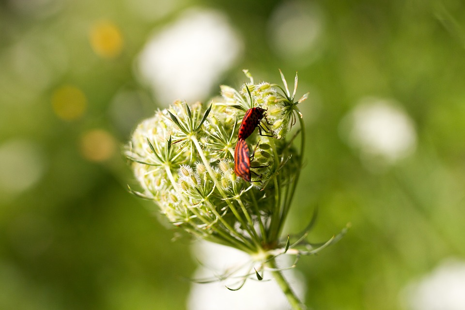 Heart, Insects, Kiss, Love, Spring, Flower, Cute