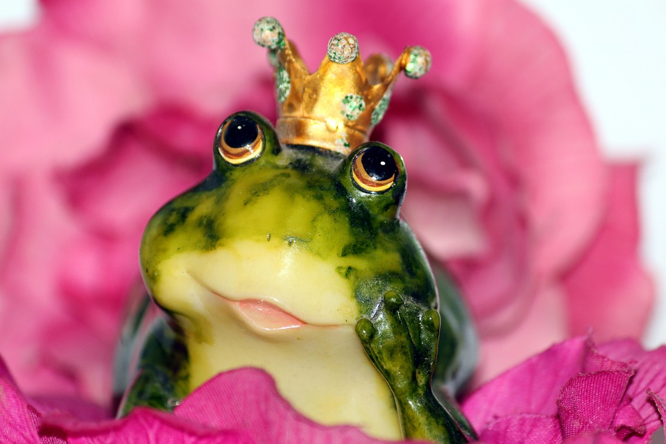 Frog Prince, Crown, Flower, Dreamy, Frog, Love, Kiss