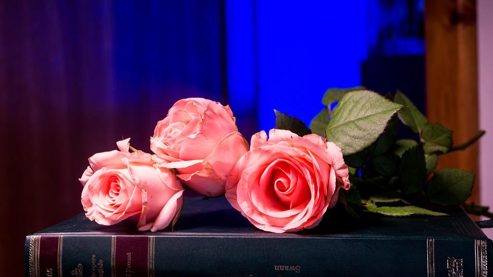 Flower, Rose, Love, Petal, Floral, Romance, Beautiful
