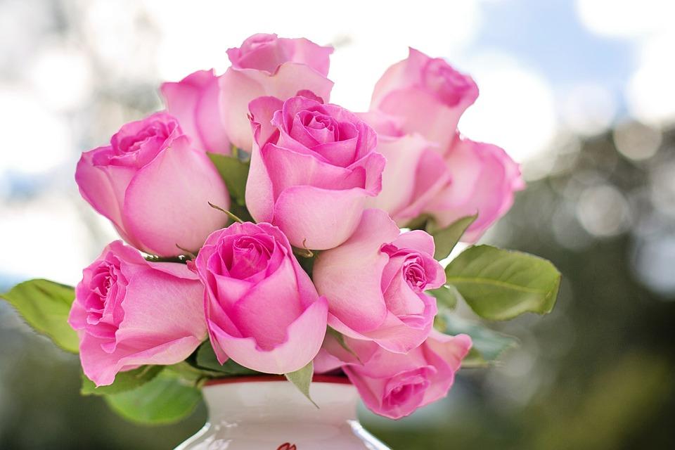 Pink Roses, Roses, Flowers, Romance, Romantic, Love