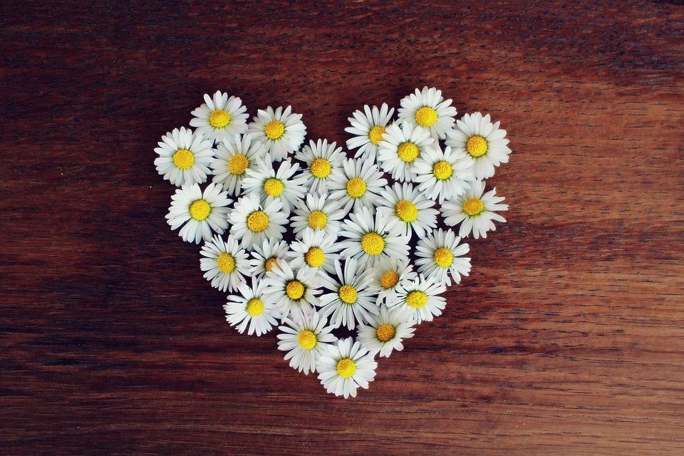 Daisies, Heart, Daisy Heart, Love, Heart Shaped
