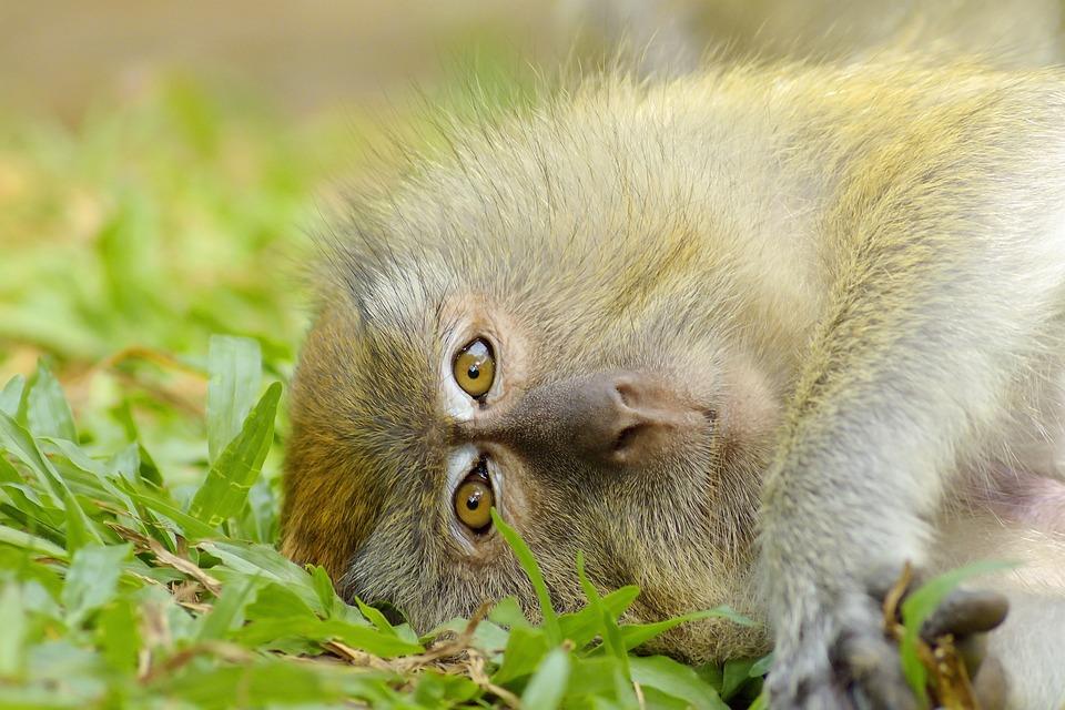 Monkey, Animal, Love, Baby, Wildlife, Mammal, Nature