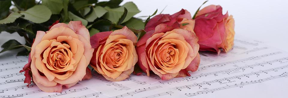 Roses, Orange, Flowers, Sheet Music, Love Of Music