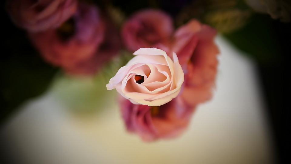 Flower, Rose, Petal, Nature, Beautiful, Love, Romance