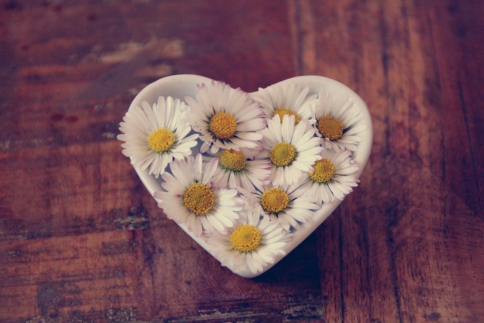 Daisy, Heart, Love, Romantic, Thank You, Symbol