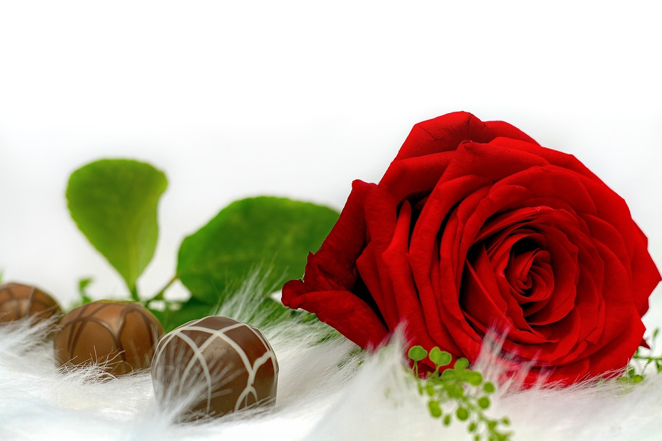 Rose, Chocolate, Love, Nibble, Chocolates, Red Rose